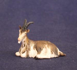 Goat lying