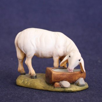 Sheep with drinking trough