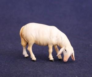 Sheep eating 1