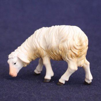 Sheep eating 3